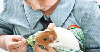 Guinea Pigs and Autism