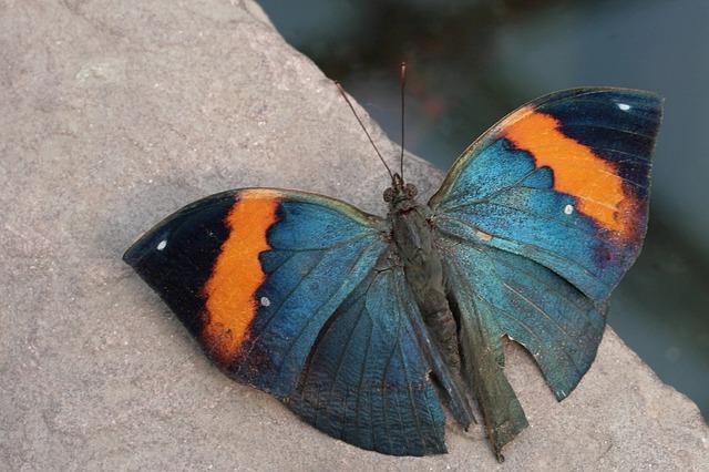 butterfly-892350_640